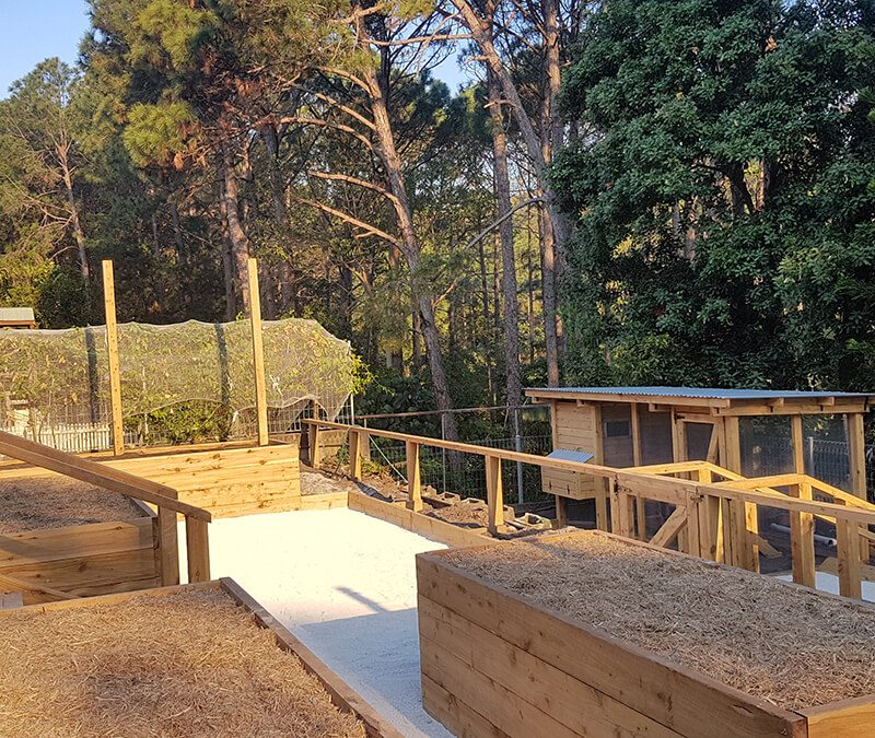Edible Garden raised beds planter boxes veggie patch gold coast melbourne tweed heads 800x675 - Services We Offer
